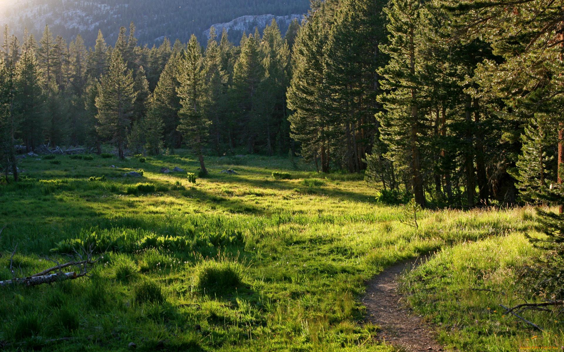 картинки с лиственным лесом поляне ваши фото
